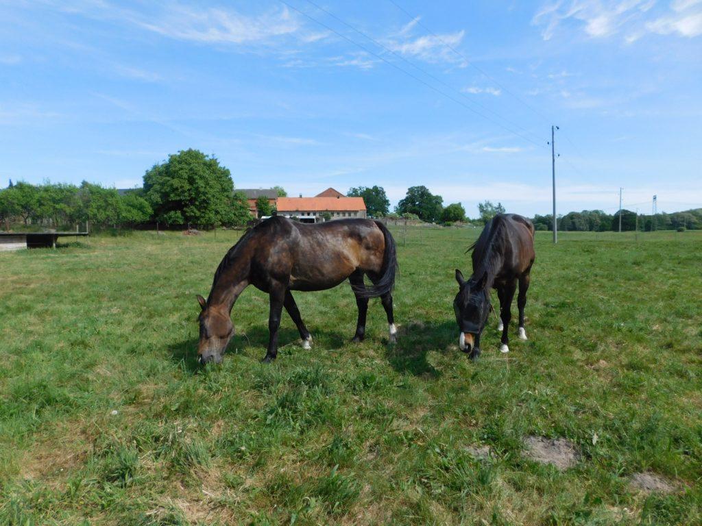 Pferde auf dem Distelhof