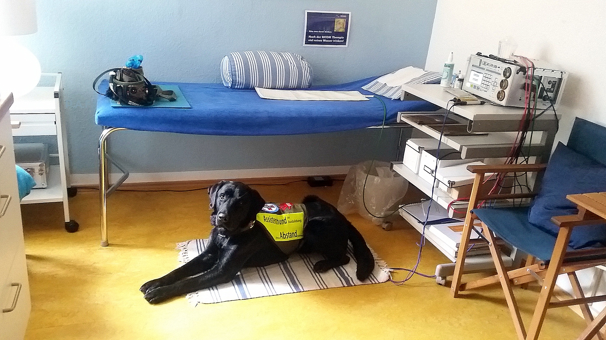 Warum Ärzte diesen Hundenasen vertrauen